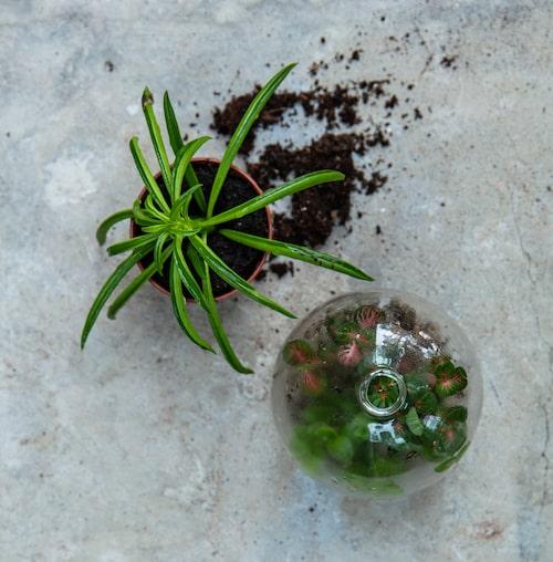 Bor du litet? I ett litet rum passar det bra med små planteringar. Se bara till att terrariet står halvljust.