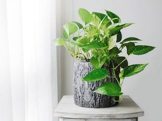 luftrenande gröna växter
