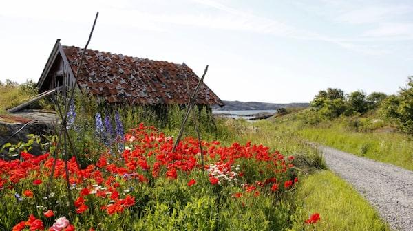 Gullholmen är ett av Bohusläns äldsta fiskelägen.