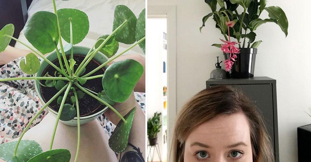 Har intresset för krukväxter positiv påverkan på ens psykiska hälsa?