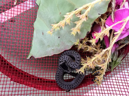 """Elisabet hittade en orm i salladsslungan: """"Det var när min syssling var här, och hon är ormrädd, så det var typiskt."""""""