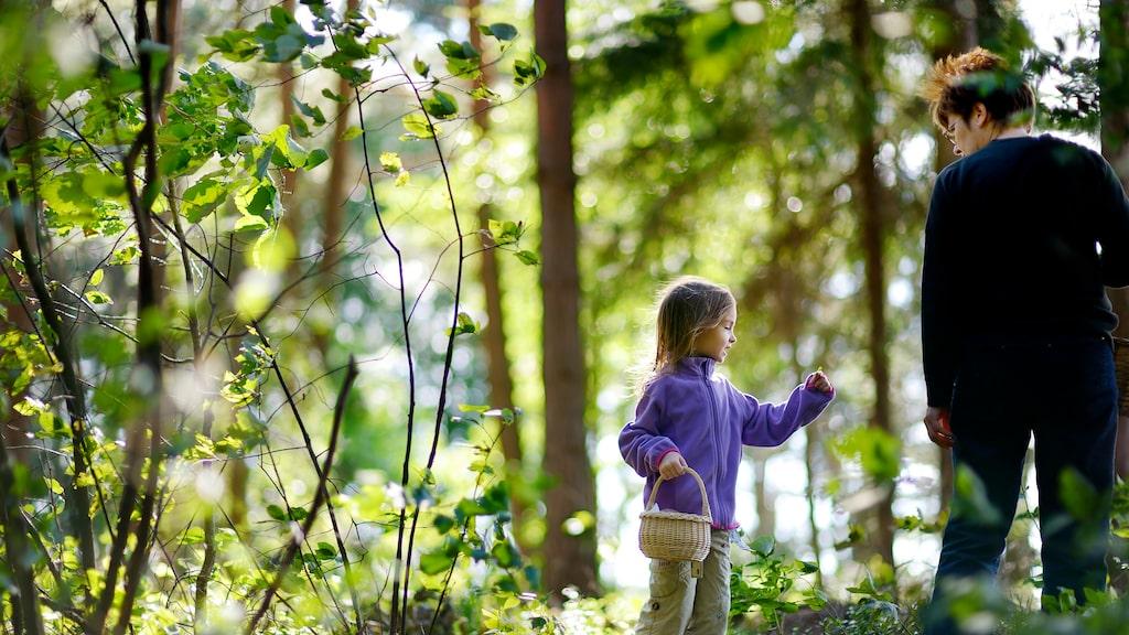 Varje år anmäls flera personer som saknade efter att de gett sig ut i skogen för att plocka bär och svamp.