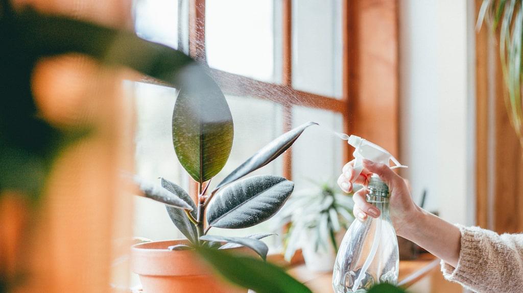 Även för mycket vatten kan ge hängiga blommor och växter. Å ena sidan är handlar det om balansen mellan för lite och för mycket vatten. Samtidigt klarar sig växterna oftast förvånansvärt länge utan.