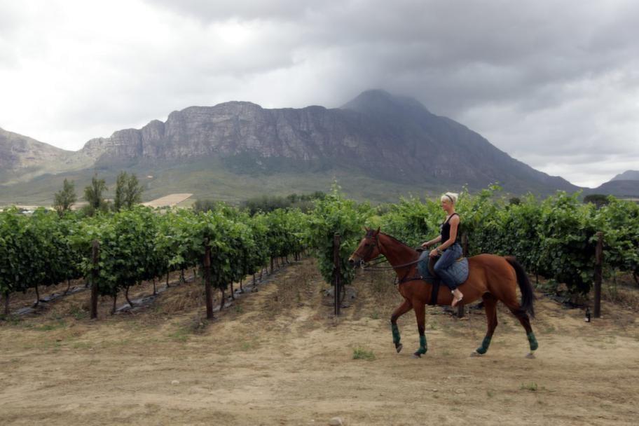 Vingården. Sedan två år tillbaka driver Kajsa Bergqvist företaget Kajsa wines som importerar viner från flera olika länder. Här på Saronsberg vingård i Sydafrika produceras ett av hennes viner.