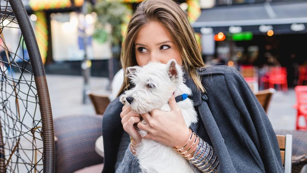 Letar du efter kärleken? Satsa på en hund först.