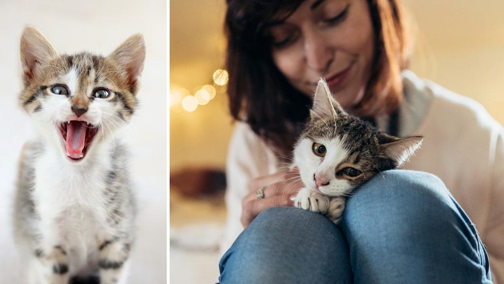 I Sverige finns över 100 000 hemlösa katter.