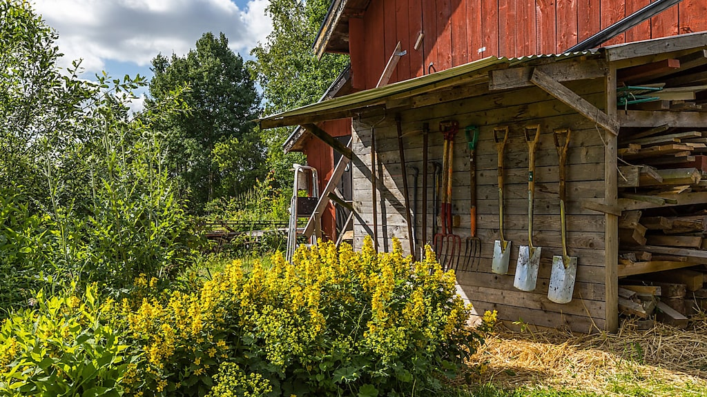 Redskap som hör en gård till hänger på väggen till vedförrådet.