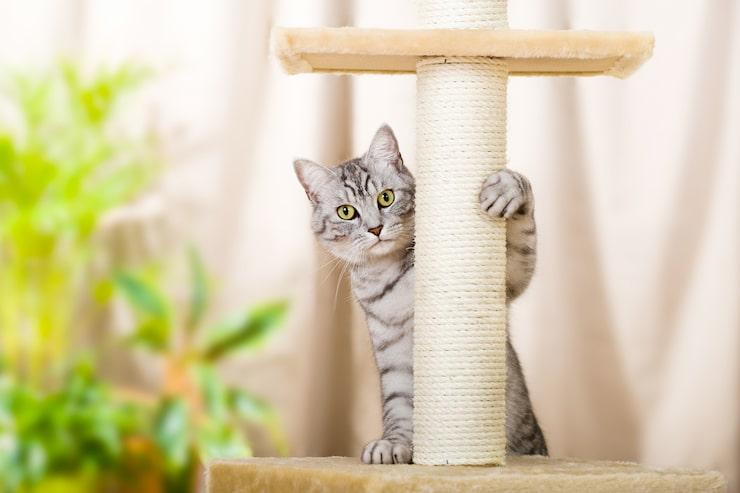 En klösställning kommer din katt garanterat älska!
