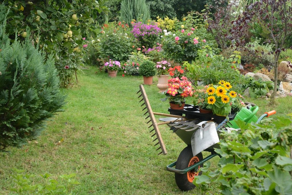 Plantera marktäckande växtlighet, blommor och trädgårdsväxter som på ett naturligt sätt slår ut ogräset genom att roffa åt sig allt ljus, vatten och alla näringsämnen som finns i jorden.