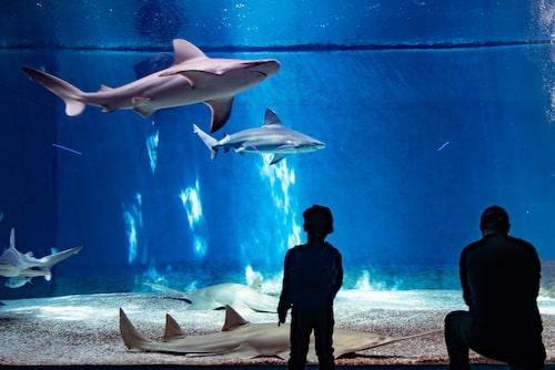 Närkontakt med hajar och rockor.