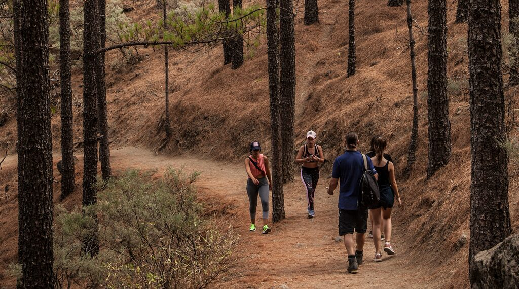 Delar av vandringen till Roque Nublo går i skuggan av resliga kanariska tallar.