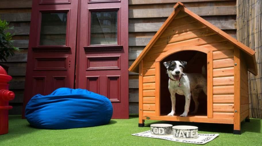 Hundsviten på The Out Hotel, New York, USA.