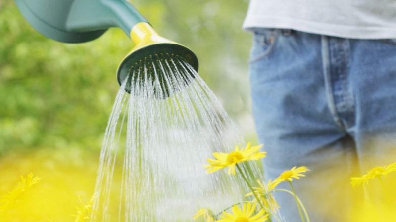 Ge växterna du vill bli av med en dusch med skållhett vatten.
