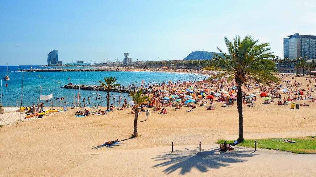 Antalet turister i Barcelona har ökat med en fjärdedel bara de senaste fyra åren: från 27 miljoner 2012 till över 34 miljoner i fjol