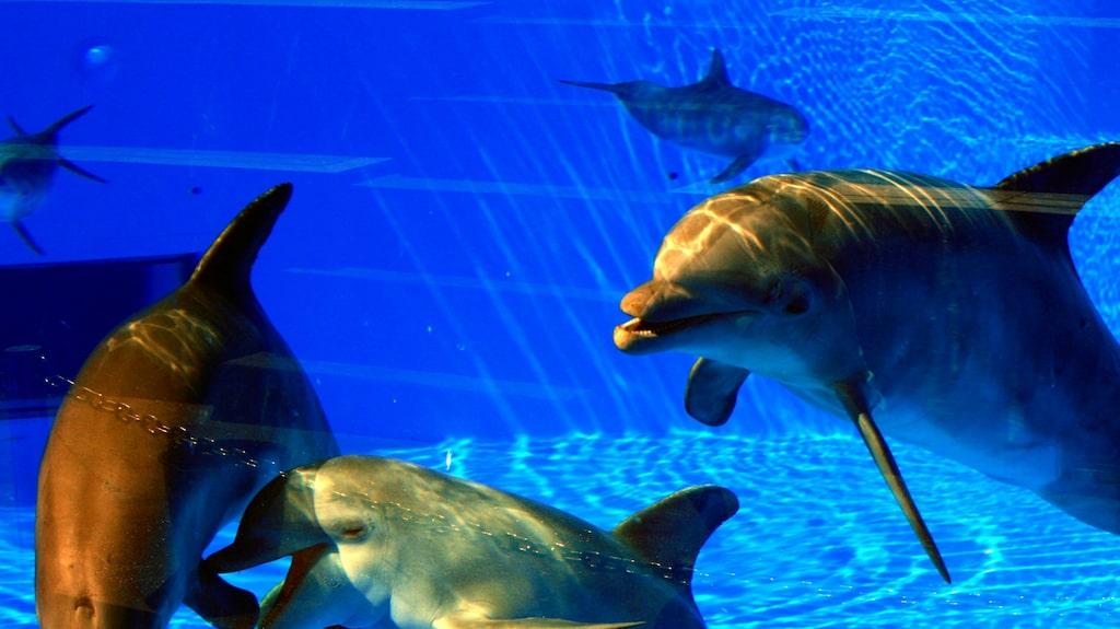 I stora bassänger finns delfiner att beskåda i Palmitos park.