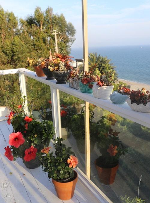 """Gunilla Persson har mycket blomkrukor på balkongen med vidsträckt utsikt över stranden och havet. Den stora tomten består av flera trädgårdar med många planteringar. """"Jag har mycket rosbuskar, ständigt blommande hibiskusar och pelargoner. Jag älskar det och har inrett allt själv."""""""