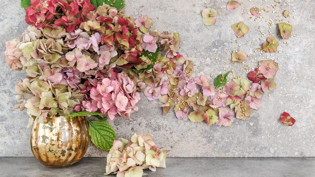 Hortensian är en magnifik blomma och vacker inredningsdetalj som man kan använda på många olika sätt.
