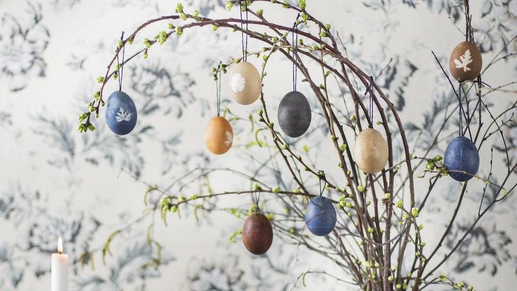 Ett fint påskris hör högtiden till. Med råvaror från kylskåpet kan du färga dina ägg själv.