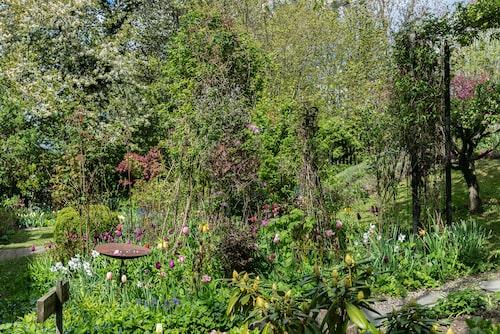När Annica flyttade in planterade hon mängder med tulpan- och vårlökar som narcisser, krokus, scilla, anemoner, snödroppar, hyacinter och kejsarkronor.