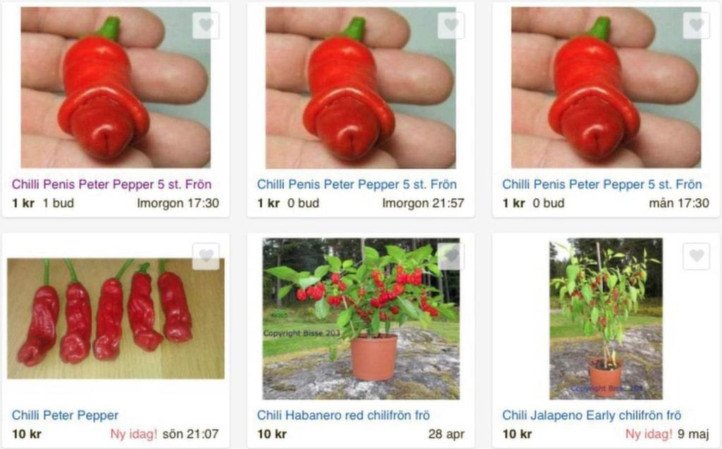 Du kan köpa penischilin både som frö och som planta. På auktionssajterna säljs massor.