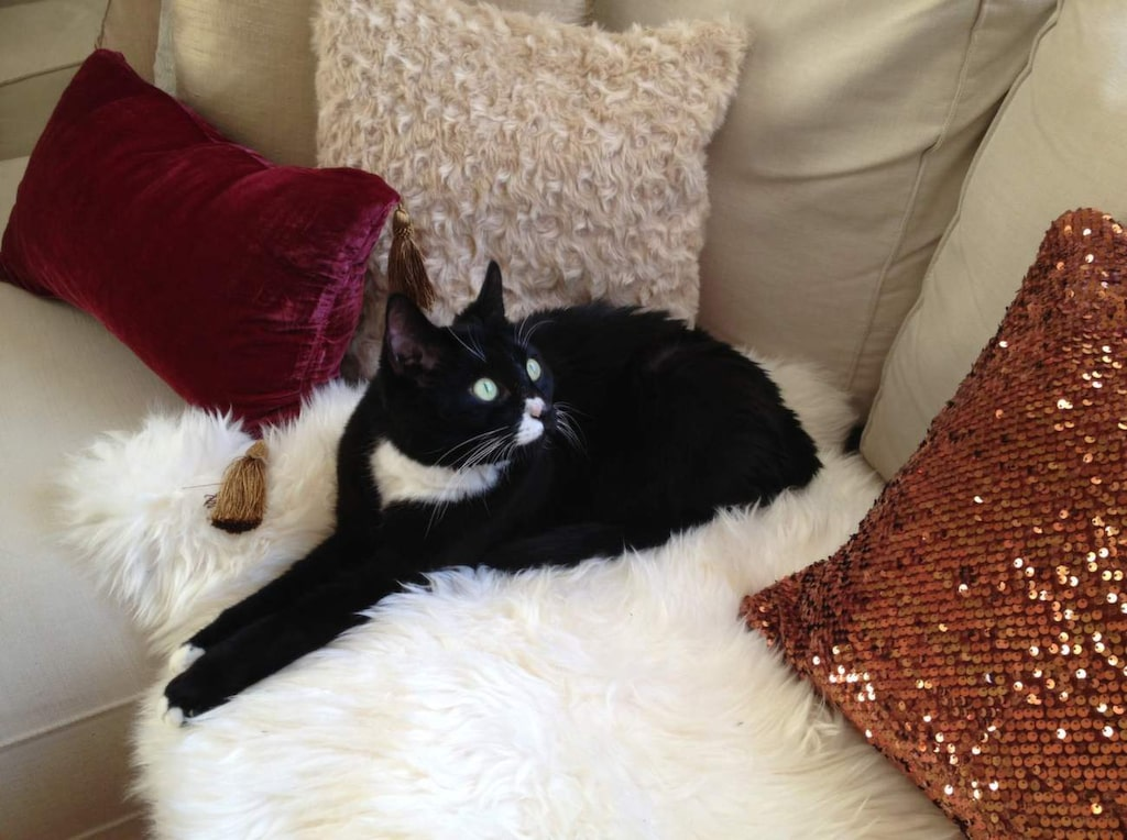 Katten Brorsan har blivit en riktig kändis på bloggen, och är en viktig inredningsdetalj hemma hos Maria.