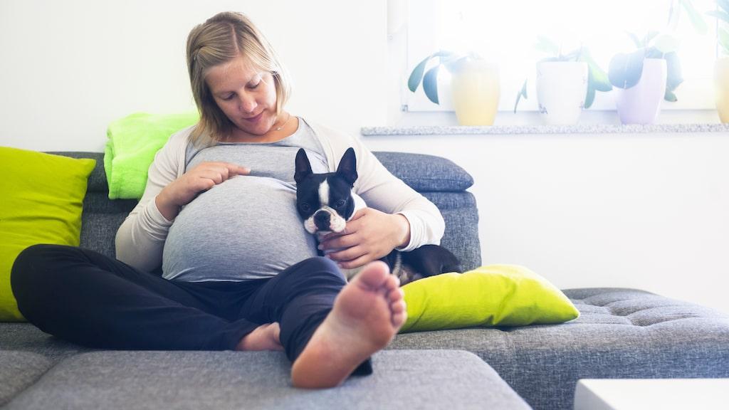 Mammorna fick själva rapportera om det fanns ett husdjur i hemmet under den andra och tredje trimestern samt tre månader efter födseln.