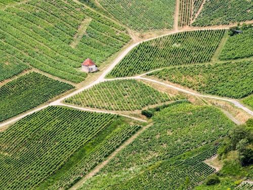 I Jura sker två procent av Frankrikes totala vinproduktion.