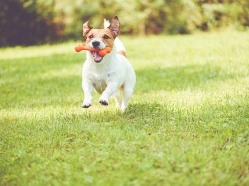 Om våra husdjur kroniskt sjuka kan det innebära att vi utvecklar ett stressbeteende.