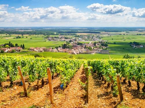 Franska Bourgogne är ett av de områden där man producerar crémant.